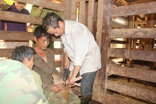 Cắt nhung hươu tại Hương Sơn Hà Tĩnh